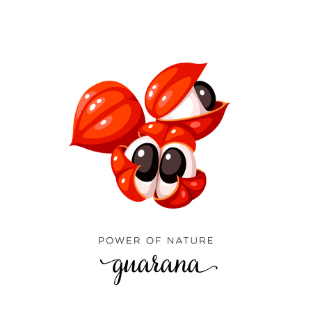 Superfood fruit. Guarana open fruit. Vector illustratie cartoon platte pictogram geïsoleerd op wit.