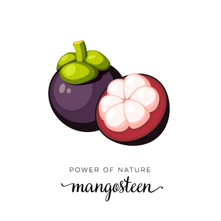 Frutta superfood Frutto di mangostano Icona piana del fumetto dell'illustrazione di vettore isolata su bianco.