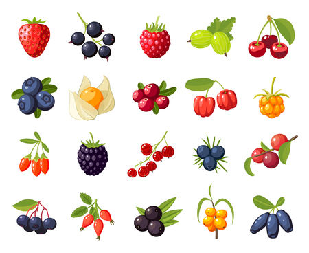 Set branches berries and leaves: cherry, rose, strawberry, acai, raspberry, juniper, cranberry, cloudberry, blueberries, goji, acerola, blackberries, currants, honeysuckle. Vector flat icon isolated