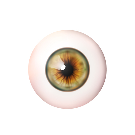Realistic eyeball. Human eye. Vector illustration icon isolated on white background.