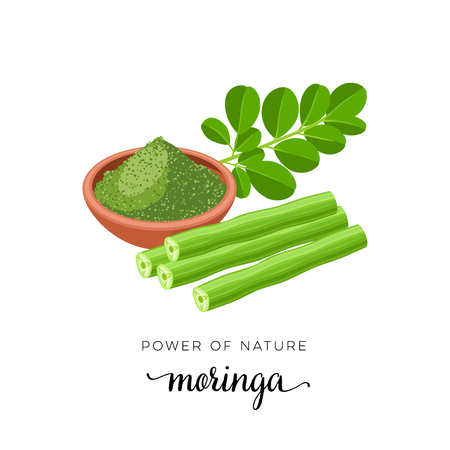Superfood fruit. Moringa, twig with leaves, powder. Vector illustration cartoon flat icon isolated on white background.