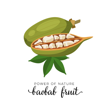Superfood fruit. Baobab fruit. Vector illustration cartoon flat icon isolated on white. Illusztráció