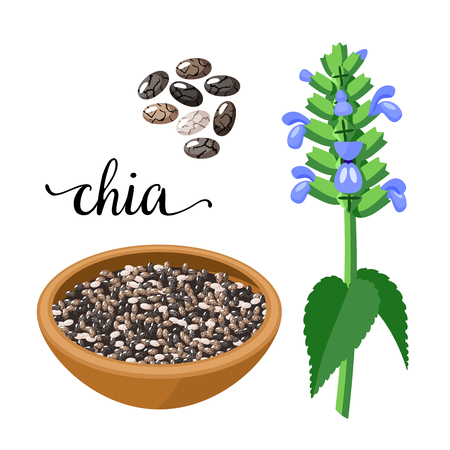 Superfood fruit. Chia seeds and branch with leaves and flowers. Vector illustration cartoon flat icon isolated on white. Stock Vector - 86155156