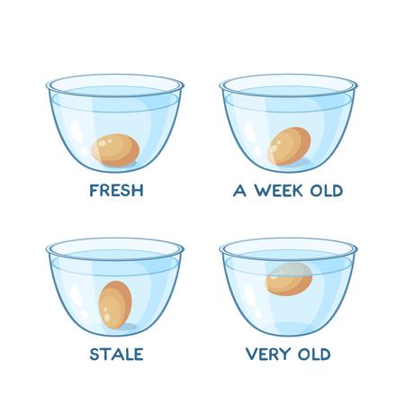 Floating egg in transparent glass bowl of water. Egg freshness test. Vector illustration cartoon flat icon set isolated on white.