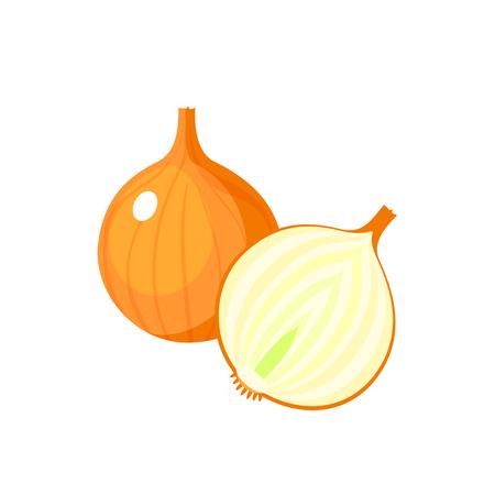 White onion bulb and half illustration.