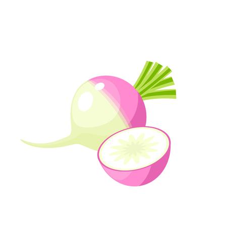 Gemüse. Rübe, ganz und halb. Flache Ikone der Vektorillustrations-Karikatur lokalisiert auf Weiß. Standard-Bild - 88363711