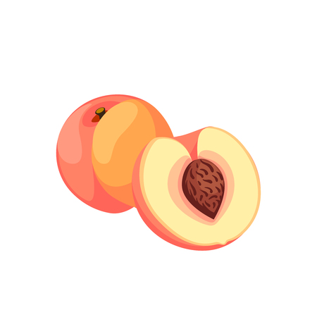 Summer fruits for healthy lifestyle. Ripe peach, whole fruit and half. Vector illustration cartoon flat icon isolated on white.