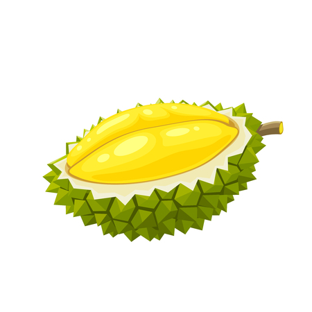 Summer tropical fruits for healthy lifestyle. Durian, half of fruit. Vector illustration cartoon flat icon isolated on white. Ilustração