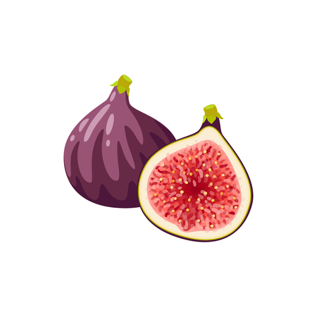 Summer tropical fruits for healthy lifestyle. Fig, purple whole fruit and half. Vector illustration cartoon flat icon isolated on white. Иллюстрация