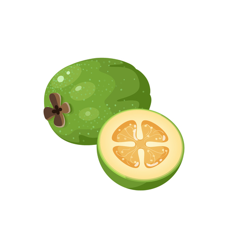 Summer tropical fruits for healthy lifestyle. Feijoa, whole fruit and half. Vector illustration cartoon flat icon isolated on white.