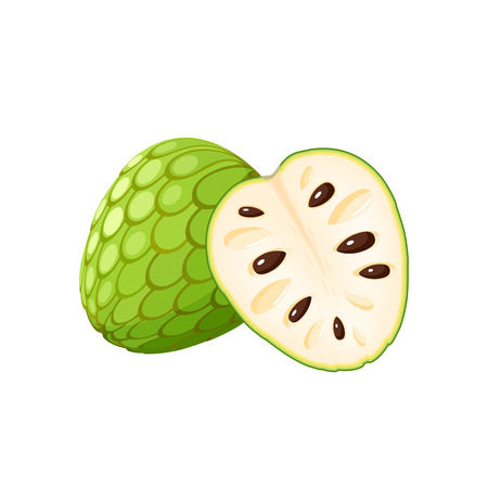 Summer tropical fruits for healthy lifestyle. Cherimoya, whole fruit and half. Vector illustration cartoon flat icon isolated on white. Stock Illustratie