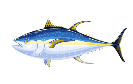 Commercial fish species. Yellow fin tuna.