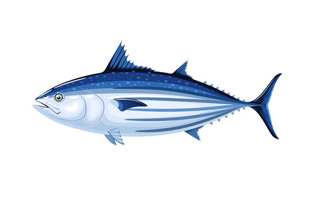 Commercial fish species. Illustration