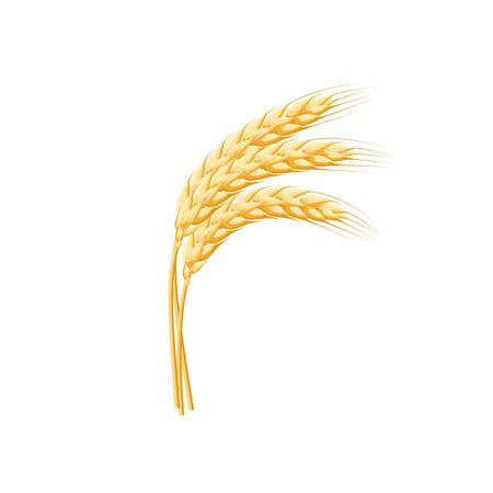 Weizenspitzenohr getrennt auf Weiß.