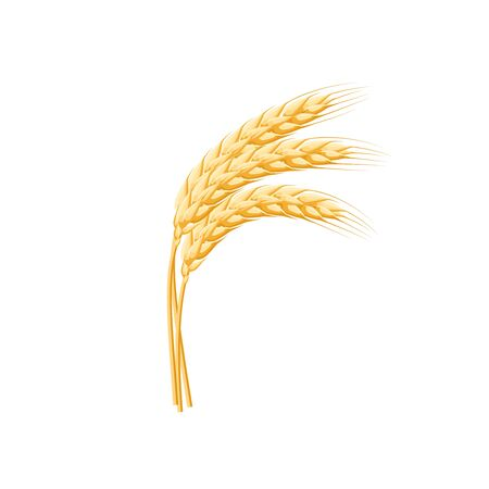 Wheat spike ear isolated on white.