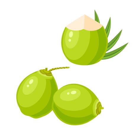 Set of young green coconuts. Vector illustration cartoon flat icon isolated on white.