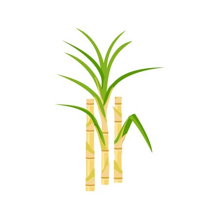Sugar cane, ingredient for sugar production. Vector illustration cartoon flat icon isolated on white background, template for packaging label design.