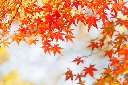 autumnal leaves 免版税图像