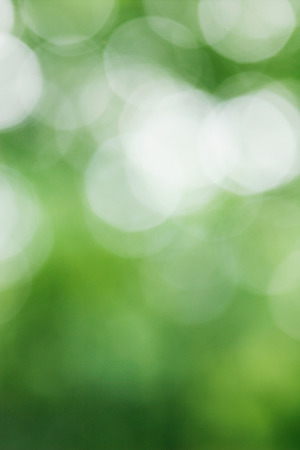 green forest: natural green blurred background