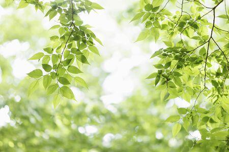 Fresh green tree leaves