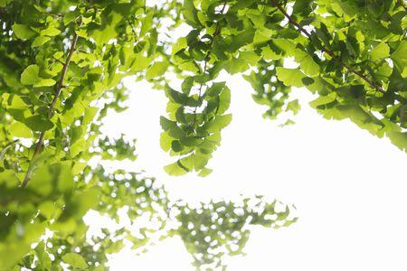 Fresh green tree leaves 免版税图像