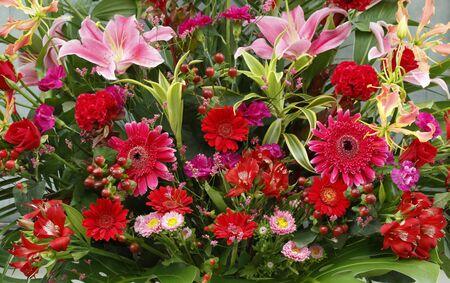 colorful flower background 免版税图像