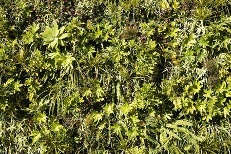 green plants background 免版税图像