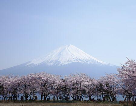 Mount Fuji And Cherry trees 免版税图像