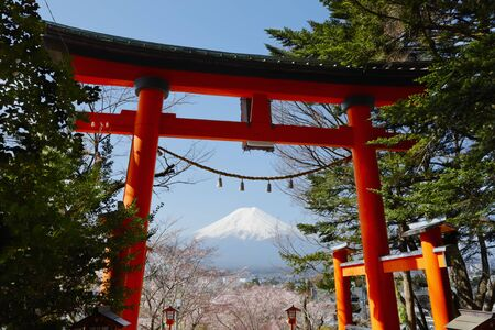 Mt. Fuji and the shrine torii and cherry blossoms