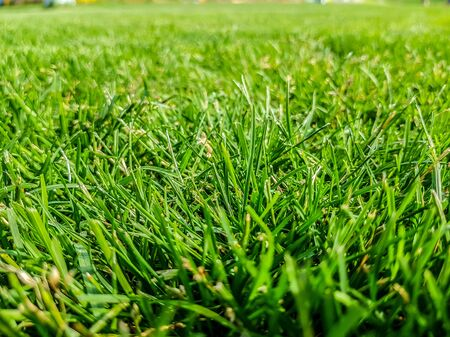 Green lawn background. Nature background. Green grass texture. Spring fresh lawn carpet Reklamní fotografie - 133056480