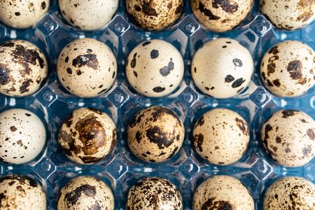 Quail eggs in a plastic box on a classic blue background. Plasticine box of quail eggs on a blue background.