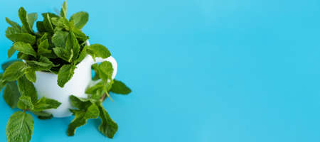 Cafes and restaurants, refreshing drinks, natural products, healthy food concept - laying out banner bundles of fresh green mint leaves in white tea cup coffee mugon blue-blue background copy space.