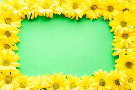 layout of bright yellow natural flowers on green background. Floral frame made of daisies. pattern of fresh plants on solid colored background. spring, summer, women day, mothers Day, ecology concept Stockfoto