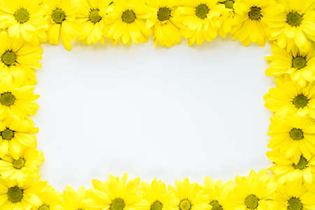 layout of bright yellow natural flowers on white background. Floral frame made of daisies. pattern of fresh plants on solid colored background. spring, summer, women day, mothers Day, ecology concept