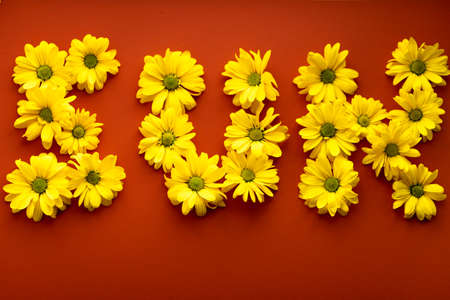 word sun laid out from bright yellow natural flowers on hot orange red background. layout of Floral letters made of daisies. pattern of plant. spring, summer, originality, freshness, lifestyle concept Stockfoto