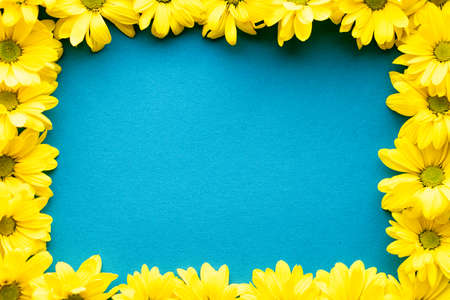 layout of bright yellow natural flowers on blue background. Floral frame made of daisies. pattern of fresh plants on solid colored background. spring, summer, women day, mothers Day, ecology concept