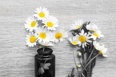Moisturizing cream based of natural herbal ingredients. Chamomile cream in small jar yellow chamomile flowers on gray background top view copy space pattern. medicine and health, ecology, hope concept