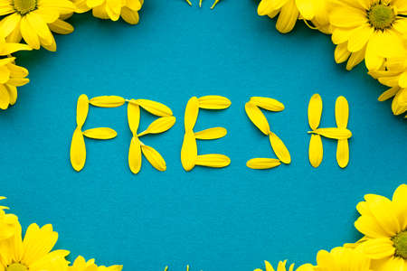 word fresh laid out bright yellow natural flowers petals on blue background. layout Floral frame made of daisies. pattern of plants. spring, summer, ecology, originality, freshness coolness concept