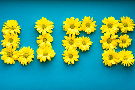 word life laid out from bright yellow natural flowers on solid blue background. layout Floral frame made of daisies. pattern of plant. spring, summer, ecology, originality, freshness lifestyle concept