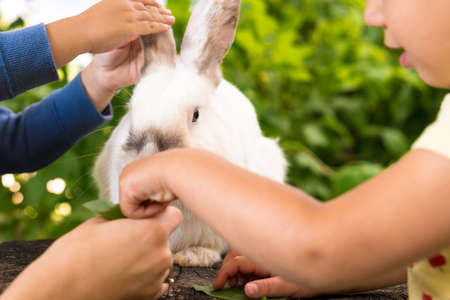 Small children feed a large white rabbit sitting on a tree stump in the garden in summer. Hare in wild meadow gnaws and eats grass in spring or summer. Animal, environmental protection. easter concept Фото со стока