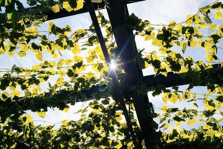 paysagiste: Vert jardin de toit en milieu urbain