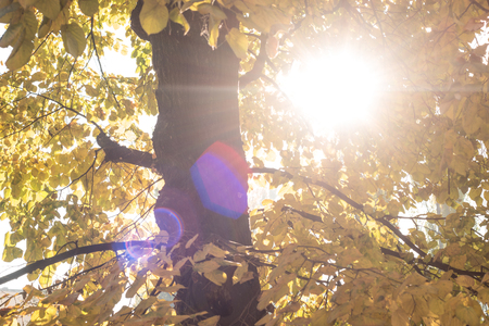 warmly: Autumn scenery with the sun warmly shining through the gold leaves of a beech tree