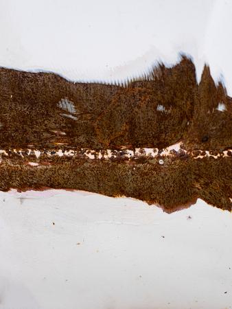 surface: Iron surface rustIron surface rust