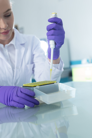 modified: Laboratory assistant in the laboratory of of food quality.Cell culture assay to test genetically modified seed Stock Photo