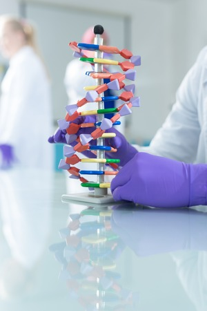 nucleotides: Woman scientist holding DNA molecule Stock Photo