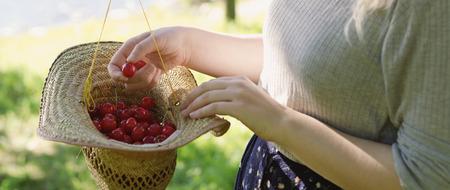 Bucket of freshly picked cherrys in a straw hat.  Stock Photo