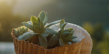 Succulent plant on the sunset time Stock Photo