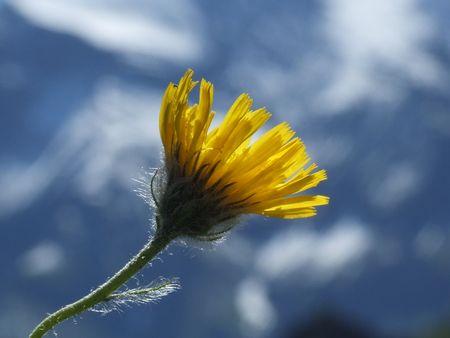 natur: 32 Fiore, Natura, Montagna, Berg, Blume, Natur, Alpine