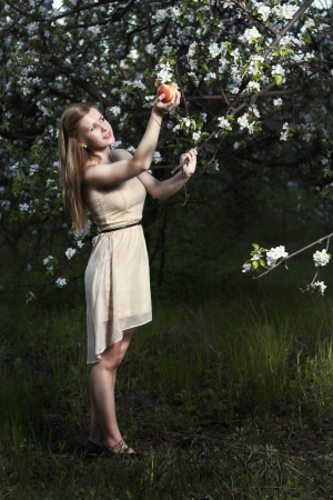 girl plucks an apple from a tree in the gardenrl in the apple orchard photo