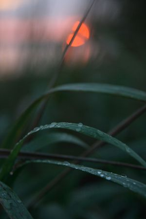 Evening dew on a sunset.